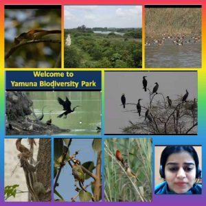 Yamuna Biodiversity Park Virtual Visit